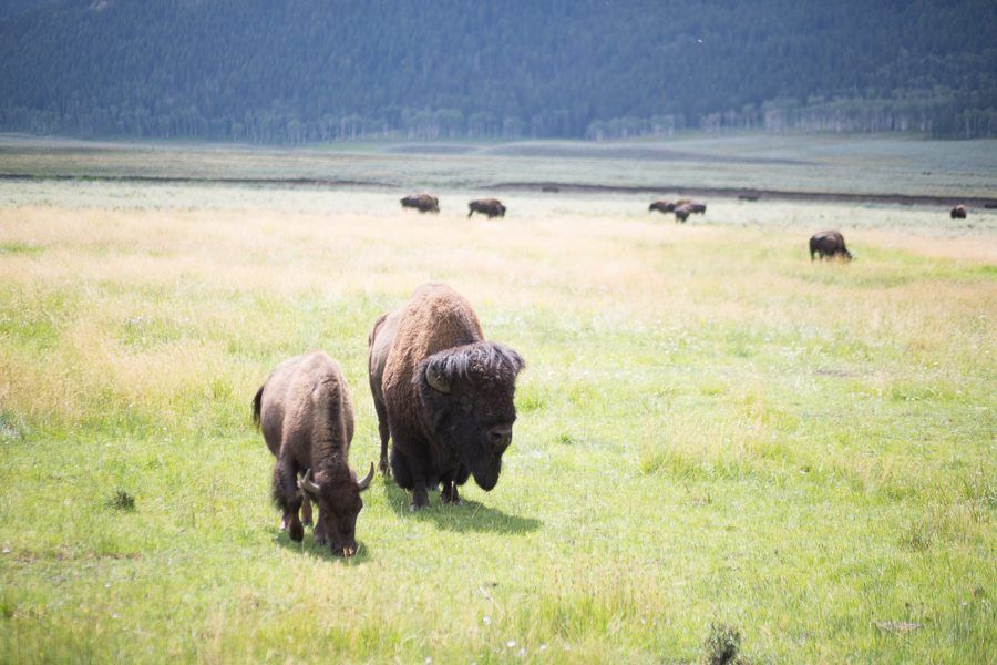 travel-rv travel-yellowstone