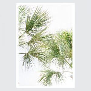 verticle palms