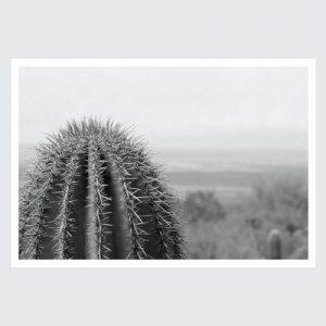 lonely cactus print