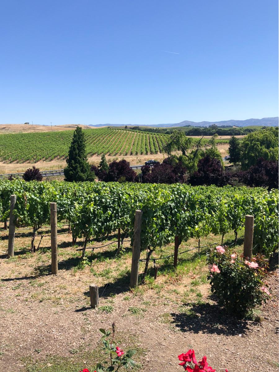 napa valley california vineyards